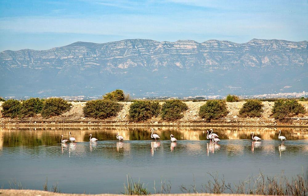Punta Banya en Delta del Ebro