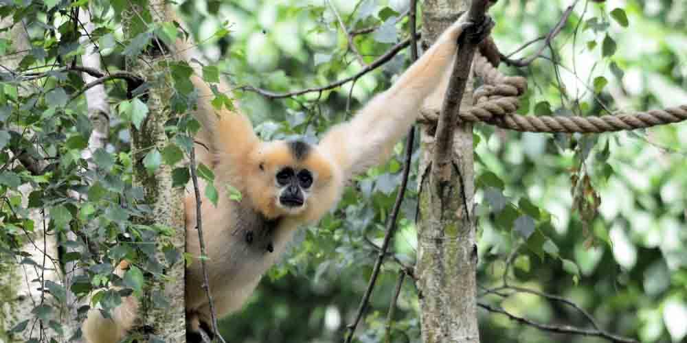 Un mono en el Artis Royal Zoo de Ámsterdam.