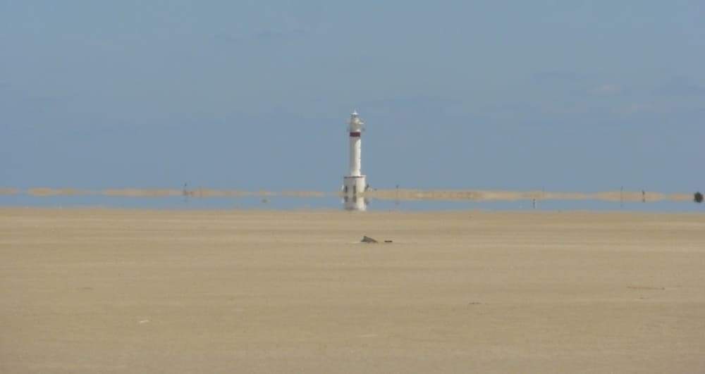 La Playa de Punta del Falgar es un sitio muy buen conservado en el Delta del Ebro.