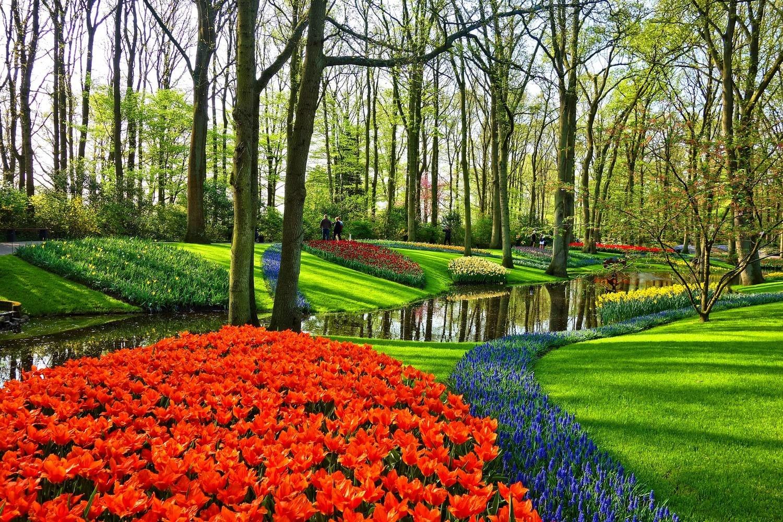 Cuándo y dónde ver los tulipanes en Ámsterdam, Holanda
