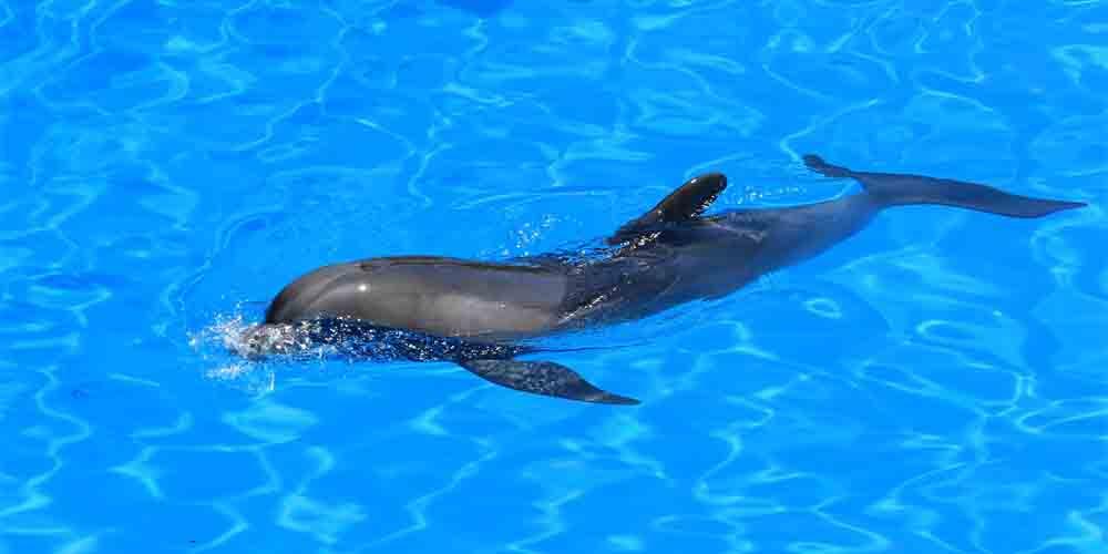 Delfín en el Acuario Poema del Mar en Las Palmas.