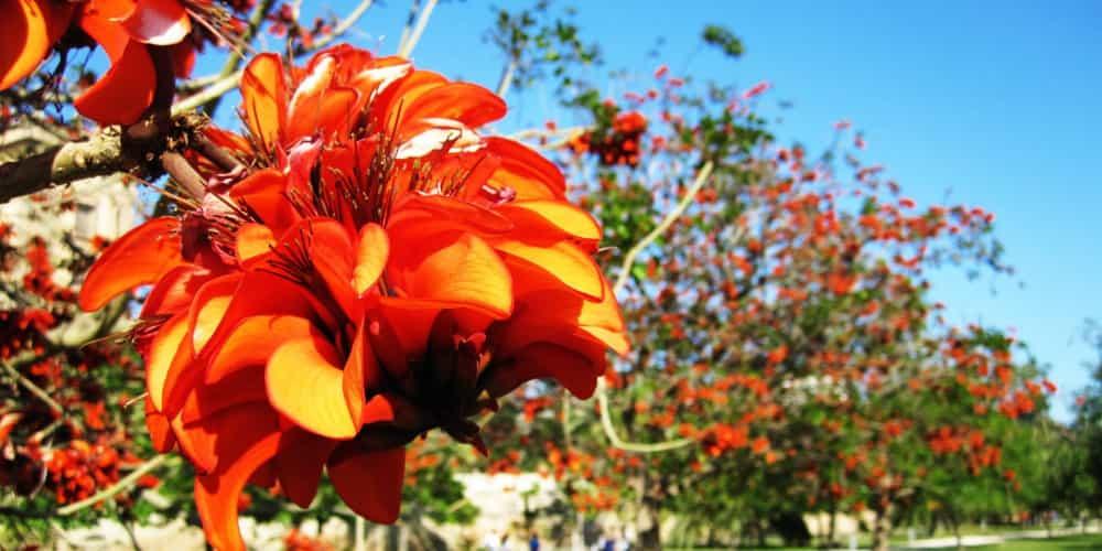 Los jardines del Turia son uno de los paisajes más hermosos que ver en Valencia en un día