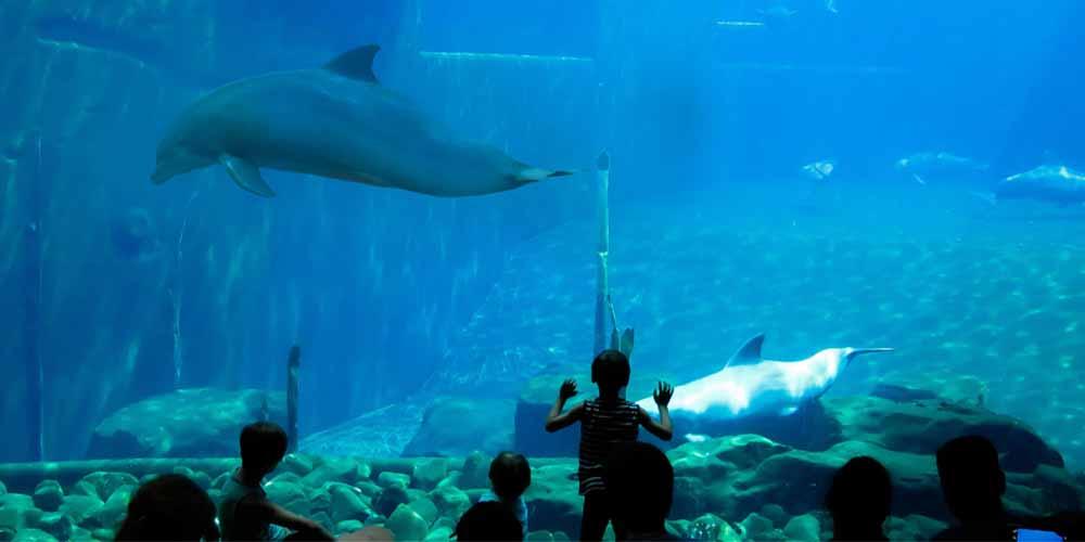 Visita al Aquarium de Palma con niños.