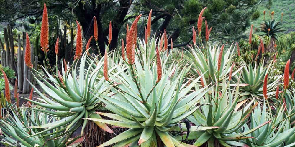El jardín botánico de Las Palmas