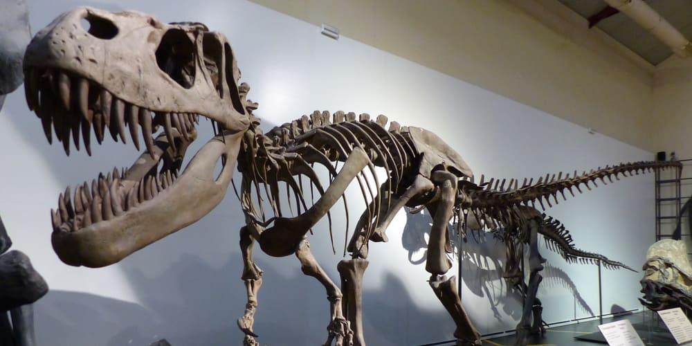 Museo de las Ciencias Naturales de Madrid, descubre toda la historia con sus animales, sin duda uno de los mejores museos de Madrid