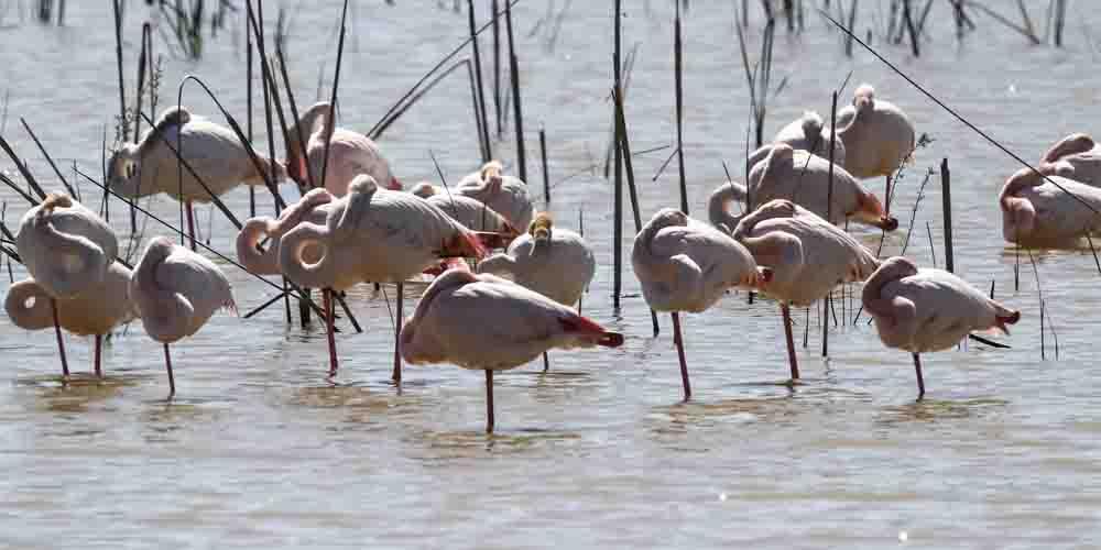 Flamencos en el Parque Natural de Doñana.