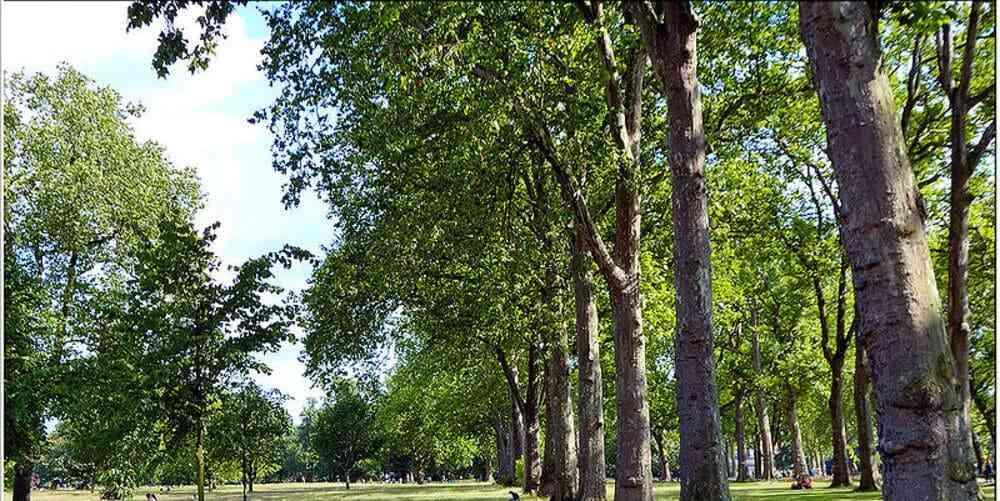 Uno de los parques de Londres, donde los niños pueden jugar y correr