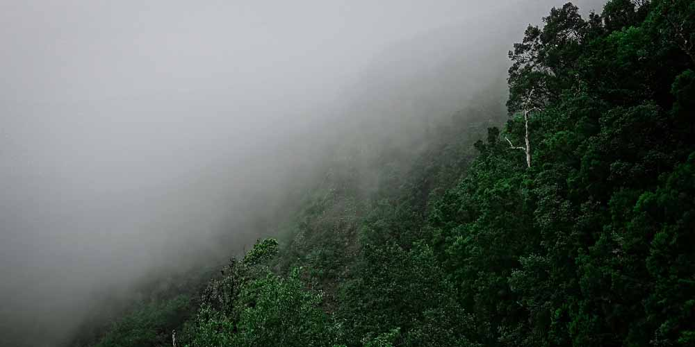 Bosque de la ruta hacia el mirador Alto Garajonay de La Gomera.