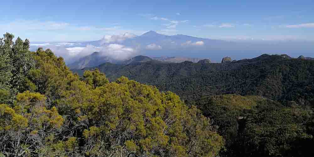 El bosque de Garajonay, cuna de los senderos de La Gomera.