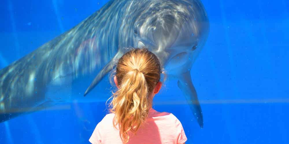 Un delfín en el acuario del Loro Parque.