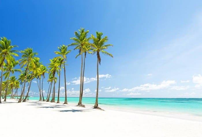 Playa y Palmeras en Isla Catalina, paraíso de El Caribe