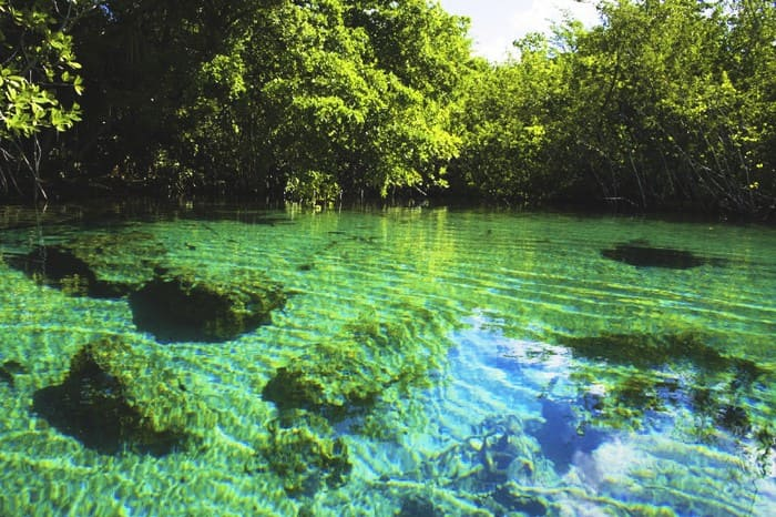 Parque o Reserva Ecológica Ojos Indígenas en Punta Cana